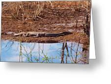 Gator Day Greeting Card
