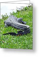 Gator In The Grass Greeting Card