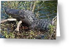 Gator On A Stick Greeting Card