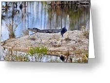 Gator On The Mound Greeting Card