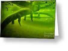Gator Reflection Greeting Card