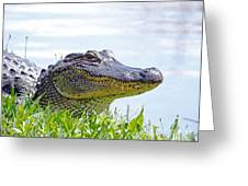 Gator Smile Greeting Card