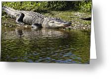 Gator Smile Greeting Card