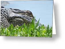 Gator Watching Greeting Card