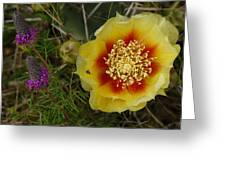 Gattinger's Prairie Clover And Prickly Pear Flower Greeting Card