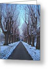Gauntlet Of Trees To Hohenheim Castle Greeting Card