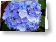 Gauzy Blues Greeting Card