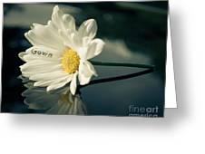 Gavin 1 Greeting Card
