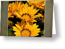 Gazania Out Of Frame Greeting Card