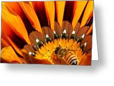 Gazania Pollination Greeting Card