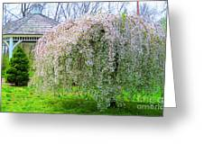 Gazebo And Willow Greeting Card