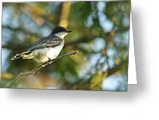 Gazing Eastern Kingbird  Greeting Card