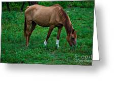 Gazing Horse Greeting Card