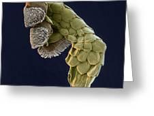 Gecko Foot Sem Greeting Card