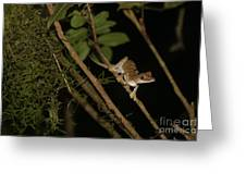 Gecko In The Night Greeting Card