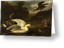 Geese And Ducks Greeting Card