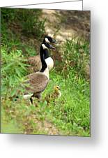 Geese And Gosling Greeting Card