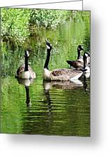 Geese And Green Greeting Card