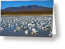 Geese At Bosque Del Apache Greeting Card by Kurt Van Wagner