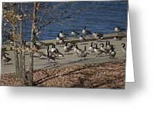 Geese At Port Landing Greeting Card