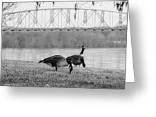 Geese By The Ohio Greeting Card