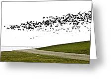 Geese Greeting Card by Frits Selier