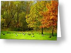 Geese Galore Greeting Card