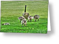 Geese Hdr Greeting Card