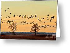 Geese In Flight I Greeting Card