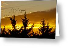 Geese In Golden Sunset Greeting Card
