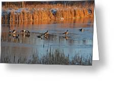 Geese In Wetlands Greeting Card