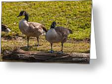 Geese On A Log Greeting Card