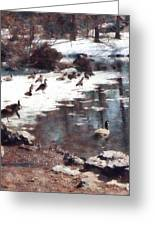 Geese On An Icy Pond Greeting Card