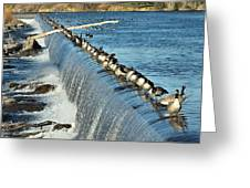Geese On The Snake Greeting Card