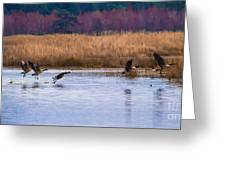 Geese Up And Away Greeting Card