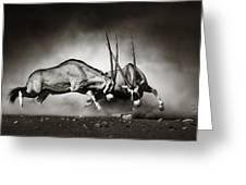 Gemsbok Fight Greeting Card