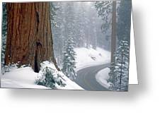 2m6836-generals Highway In The Giant Sequoias Greeting Card