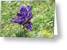 Gentian Greeting Card