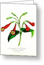 Gentian (lisianthus Puleber) Greeting Card