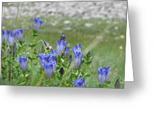 Gentian Wildflowers Greeting Card