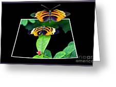 Gentle Butterfly Courtship 01 Out Of Bounds Greeting Card
