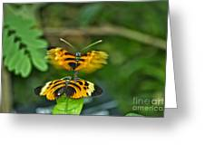 Gentle Butterfly Courtship 03 Greeting Card
