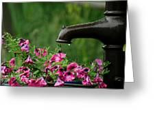 Gentle Rain - Old Water Pump - Pink Petunias - Casper Wyoming Greeting Card
