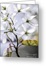 Gentle White Spring Flowers Greeting Card