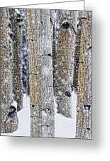 Gently Falling Forest Snow Greeting Card