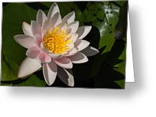Gently Pink Waterlily In The Hot Mediterranean Sun Greeting Card
