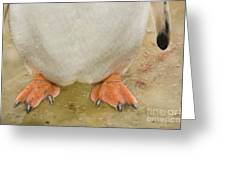 Gentoo Penguin Feet Greeting Card