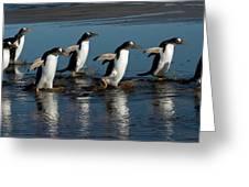 Gentoo Penguins Walking Greeting Card by Hiroya Minakuchi