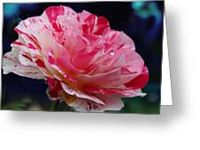 George Burns Floribunda Rose Greeting Card