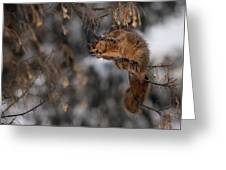 George Eating Maple Seeds In Winter Greeting Card